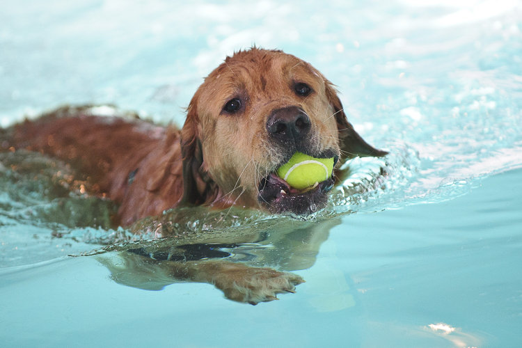 Summer-Dog-Swimming-with-Ball.jpg