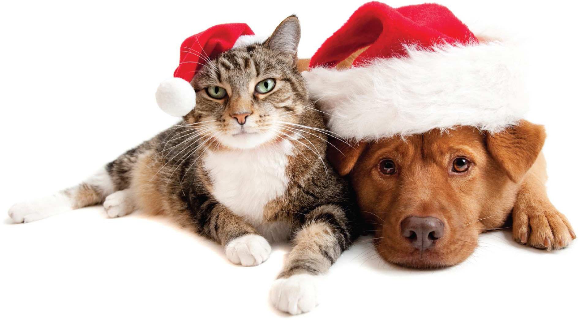 Holiday-Pets.jpg