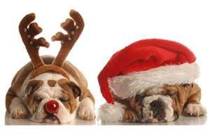 holiday-pets.png