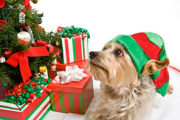 dog-friendly holiday.jpg