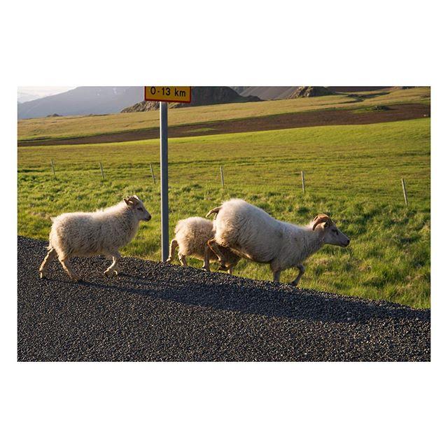 G E T⠀O U T⠀T H E⠀W A Y⠀⠀⠀⠀⠀⠀⠀⠀⠀⠀⠀⠀ ⠀⠀⠀⠀⠀⠀⠀⠀⠀⠀⠀⠀ ⠀⠀⠀⠀⠀⠀⠀⠀⠀⠀⠀⠀ ⠀⠀⠀⠀⠀⠀⠀⠀⠀⠀⠀⠀ ⠀⠀⠀ ⠀⠀⠀⠀⠀⠀⠀⠀⠀⠀⠀⠀ ⠀⠀⠀⠀⠀⠀⠀⠀⠀⠀⠀⠀⠀⠀⠀⠀⠀⠀⠀⠀⠀⠀⠀⠀ ⠀⠀⠀⠀⠀⠀⠀⠀⠀⠀⠀⠀ ⠀⠀⠀⠀⠀⠀⠀⠀⠀⠀⠀⠀ ⠀⠀⠀⠀⠀⠀⠀⠀⠀⠀⠀⠀ ⠀⠀⠀⠀⠀⠀⠀⠀⠀⠀⠀⠀ ⠀⠀⠀⠀⠀⠀⠀⠀⠀⠀⠀⠀ ⠀⠀⠀⠀⠀⠀⠀⠀⠀⠀⠀⠀ #iceland #everydayiceland #visiticeland #icelandtravel #igersiceland #inspiredbyiceland #discovericeland #wheniniceland #ig_iceland #exploreiceland #icelandic #roadtrip #sheep #alpha #sony #ontheroad #sonyalpha #icelandsecret #whyiceland #sonyimages #lamb #wool #icelandair #unlimitediceland #aroundiceland #bestoficeland #ìsland