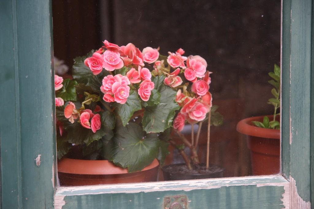 roses-1024x682.jpg