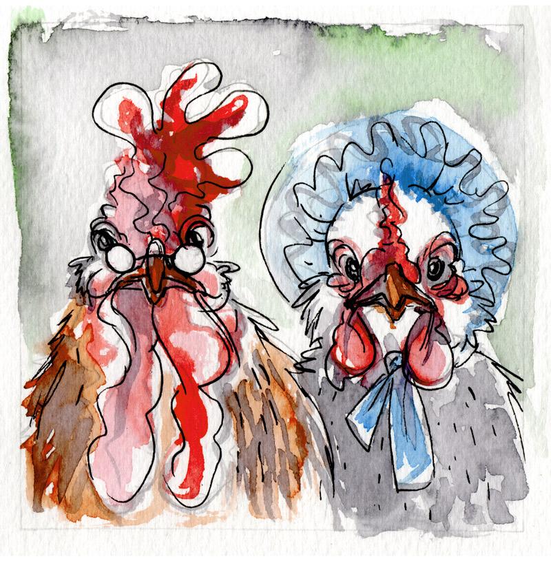 Mr. & Mrs. Chicken