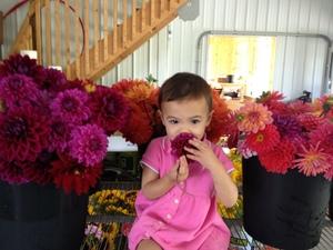 My daugher, Priya, smelling Dahlias freshly picked from the field.