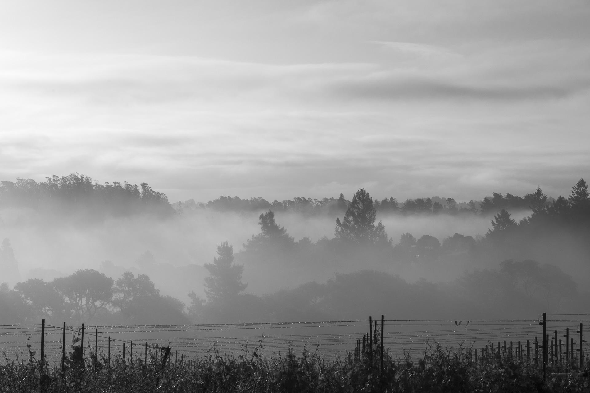 Fog covering the West Sebastopol Hills, April 2015