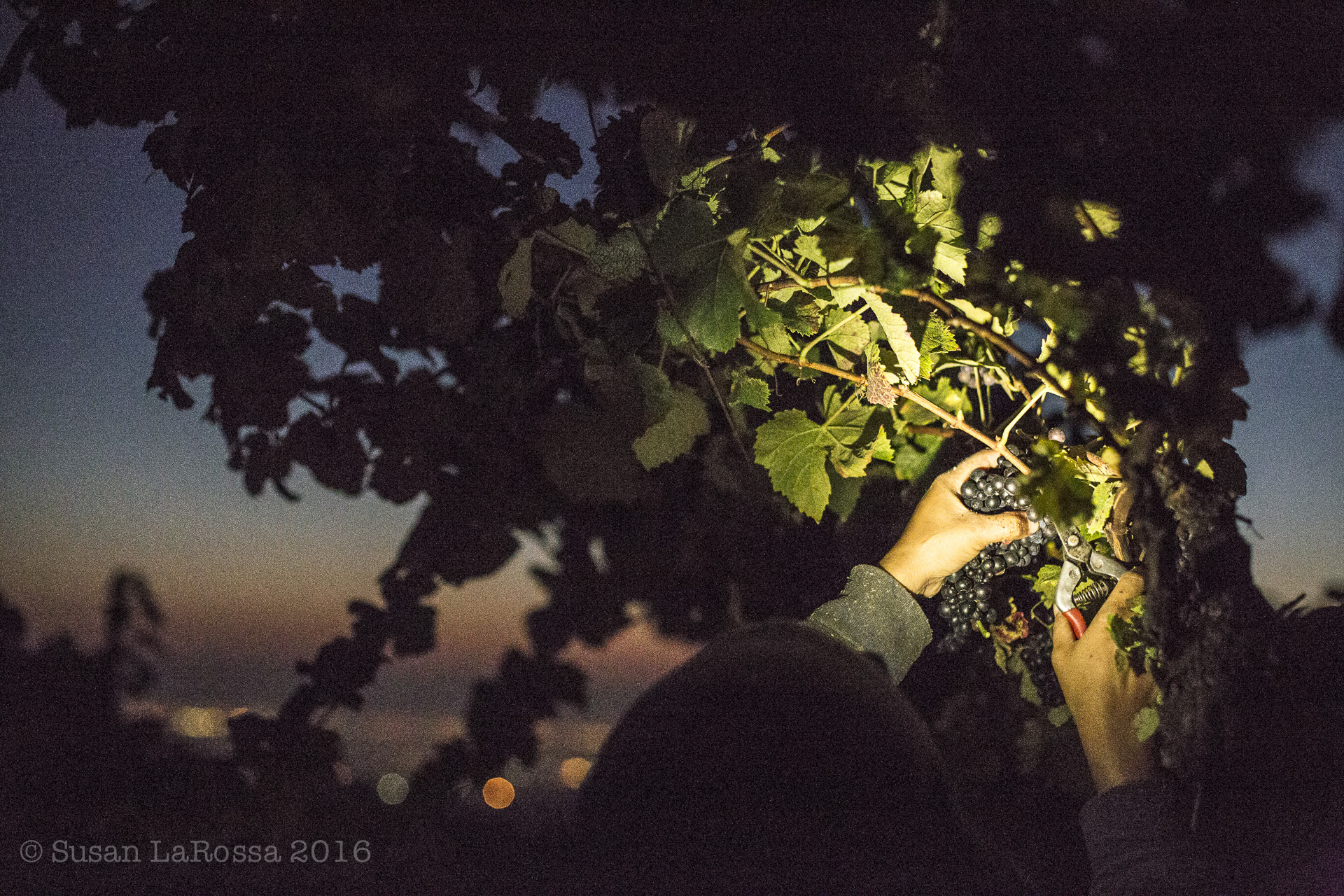 cutting vines-1.jpg