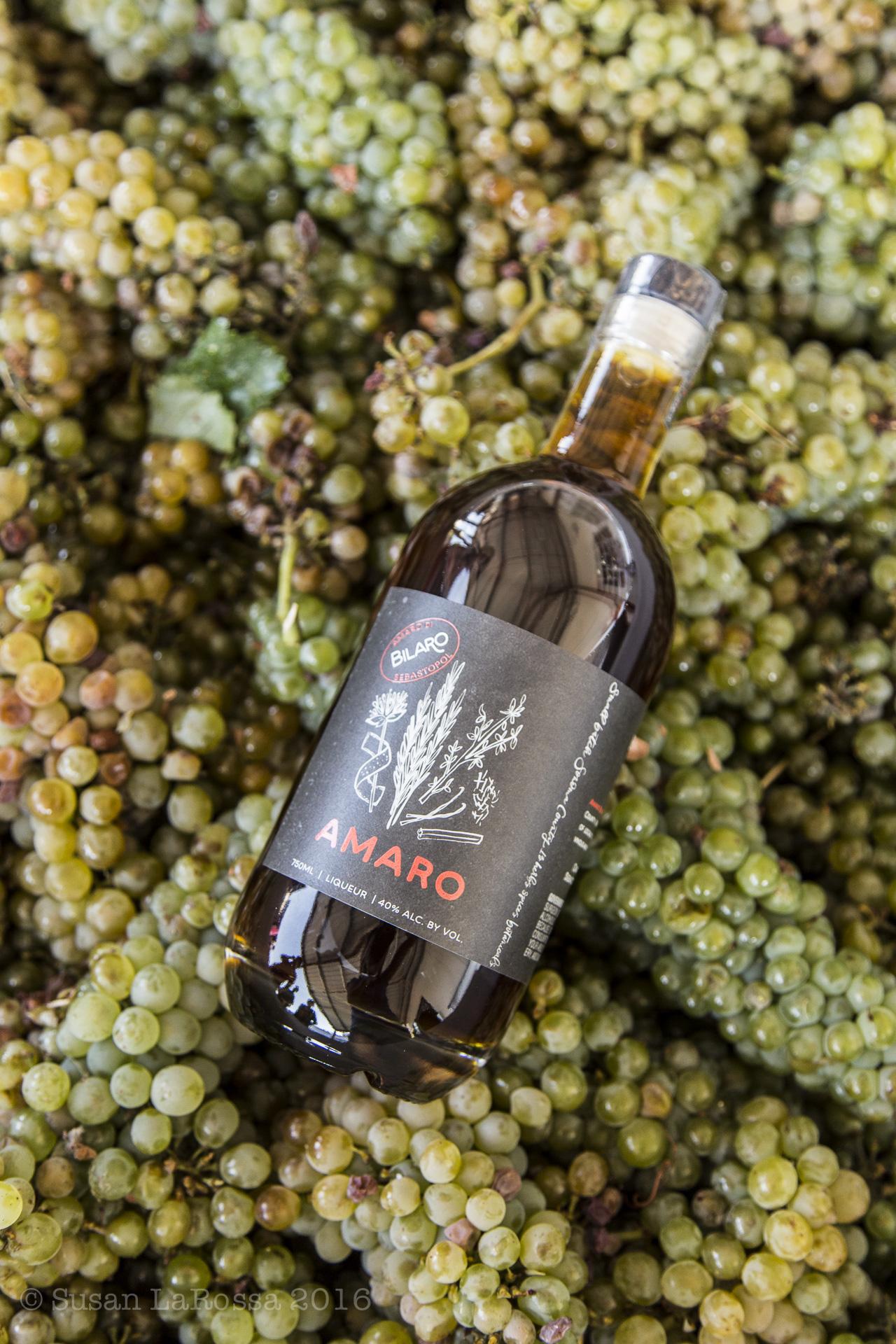 Amaro Bilaro in a bin of grapes harvested in August 2016