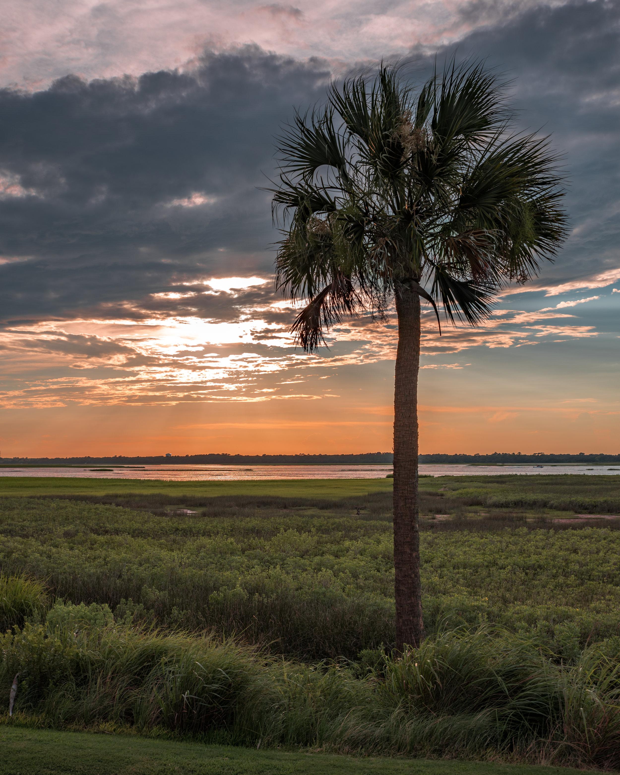 Golf Course Palm Tree Sunset.jpg