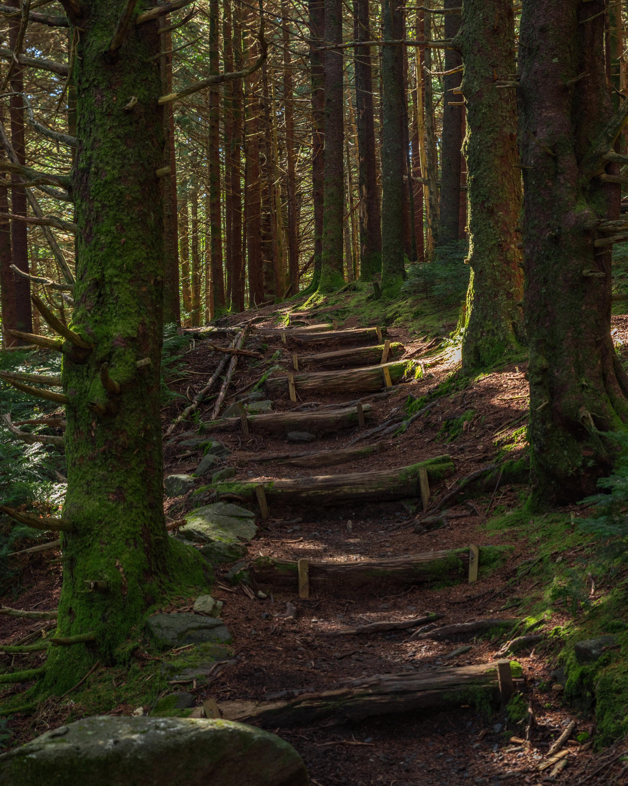 Roan High Knob Hike.jpg