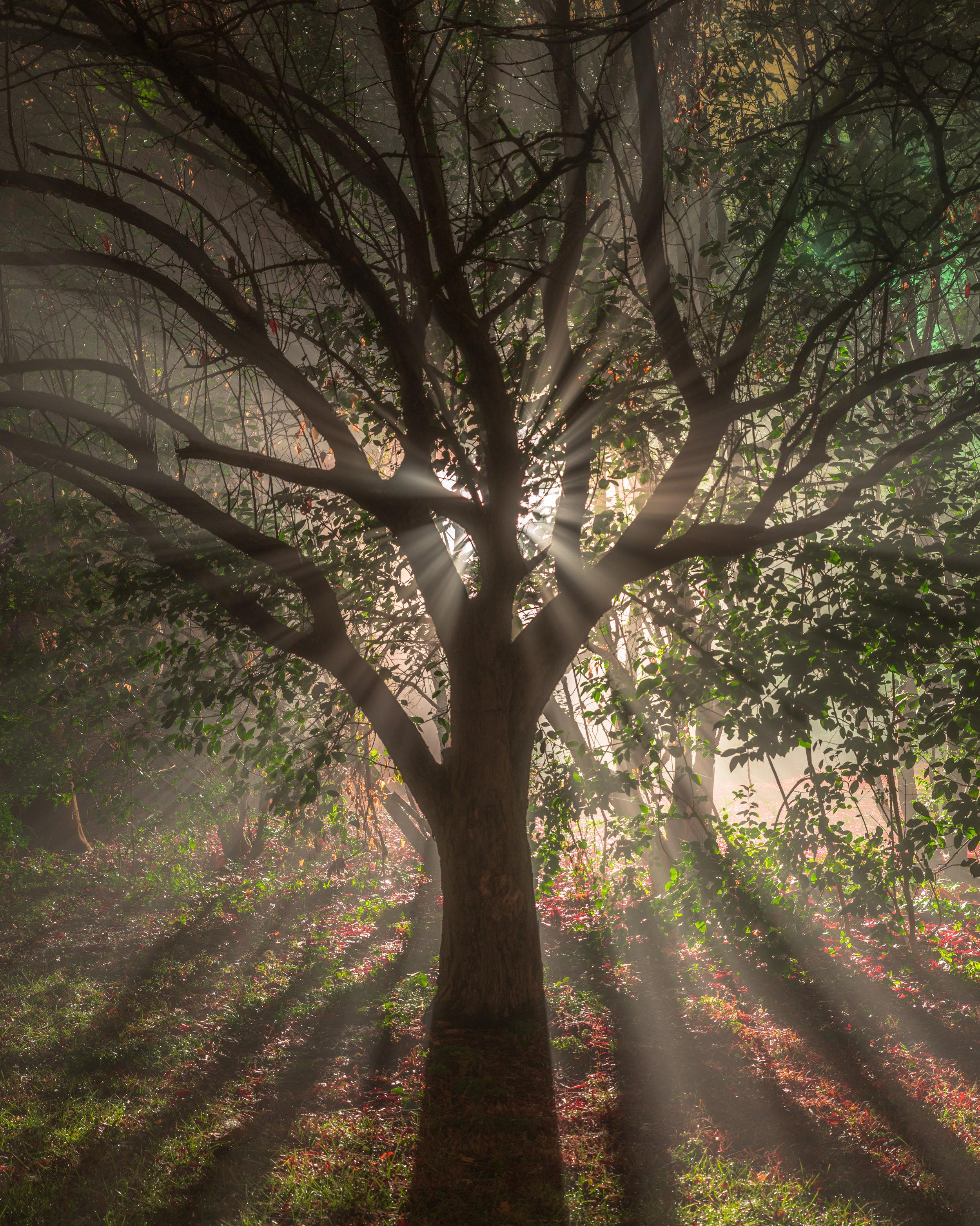 GSO Fog Tree.jpg