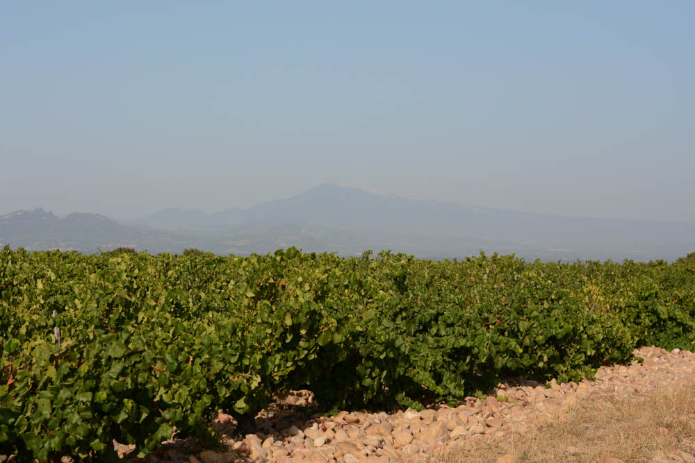 chateauneuf-du-pape-vineyard-2.jpg