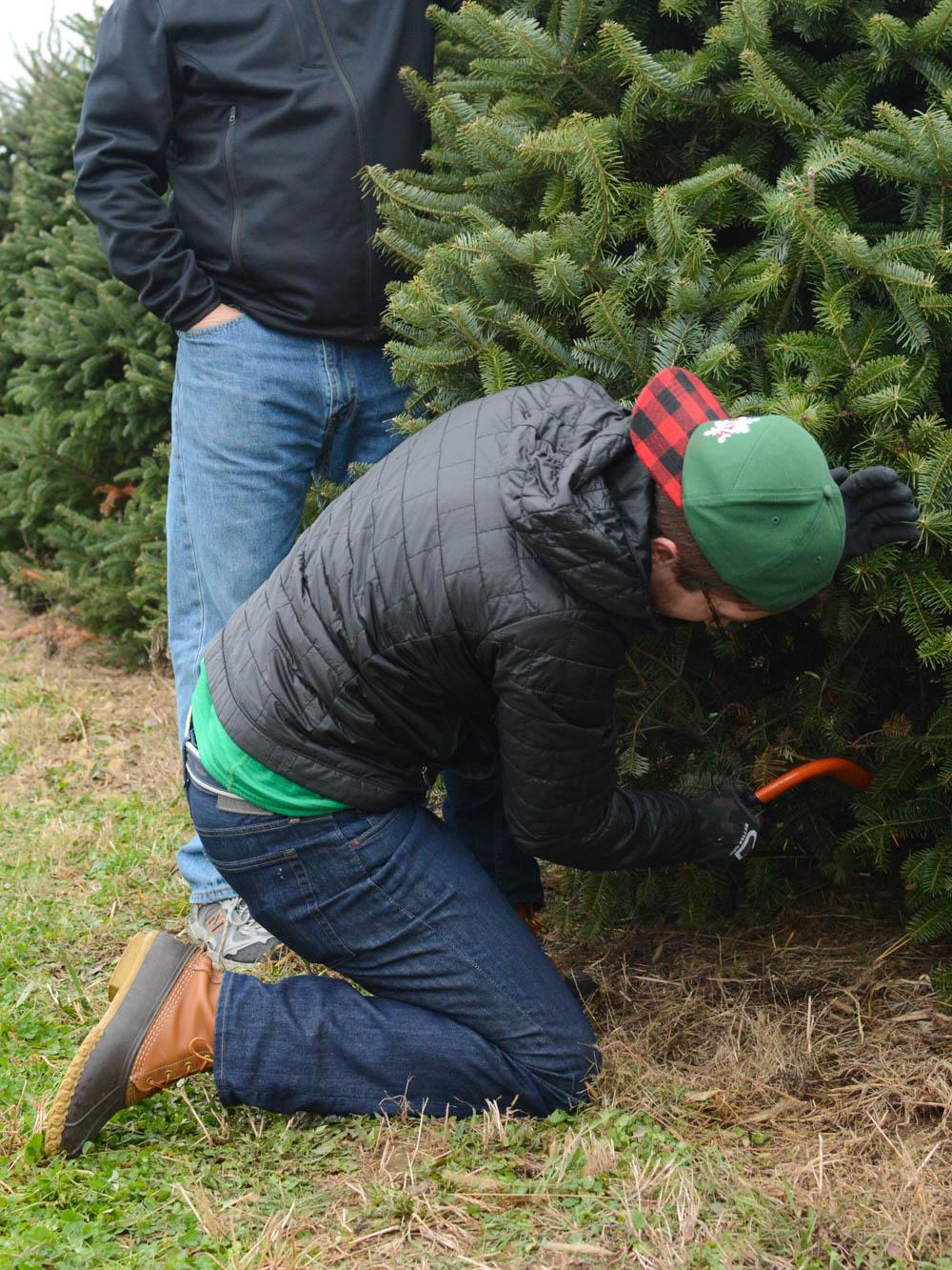 christmas-tree-farm-ohio-1.jpg