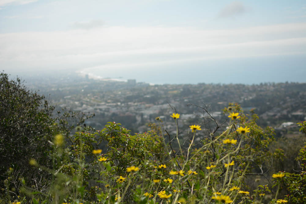 los-angeles-hike-flowers.jpg
