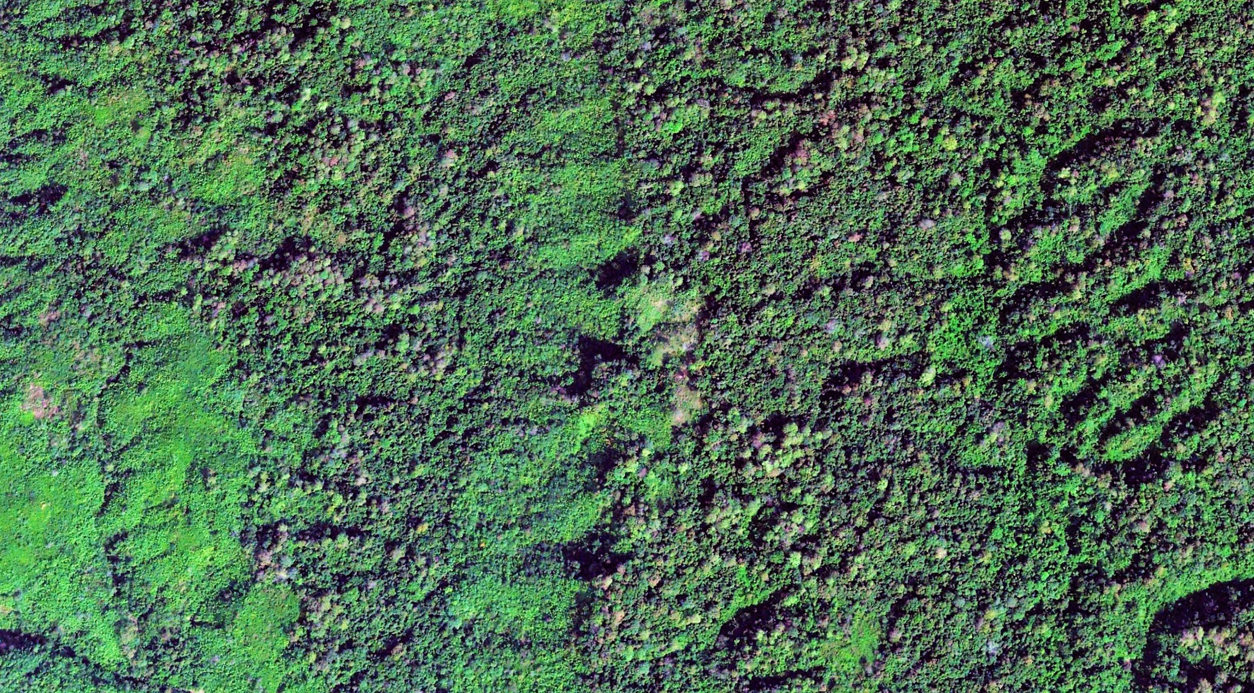Tree species diversity of Pablakhali reserved forest. Image width: 1 kilometer