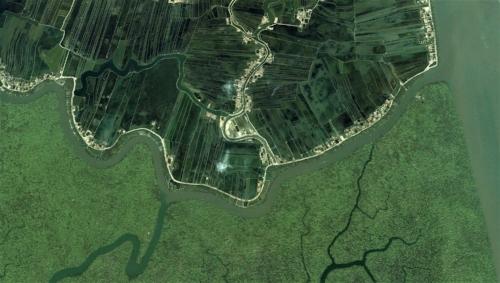 Srimp-farms-and-Sundarbans-2.jpg