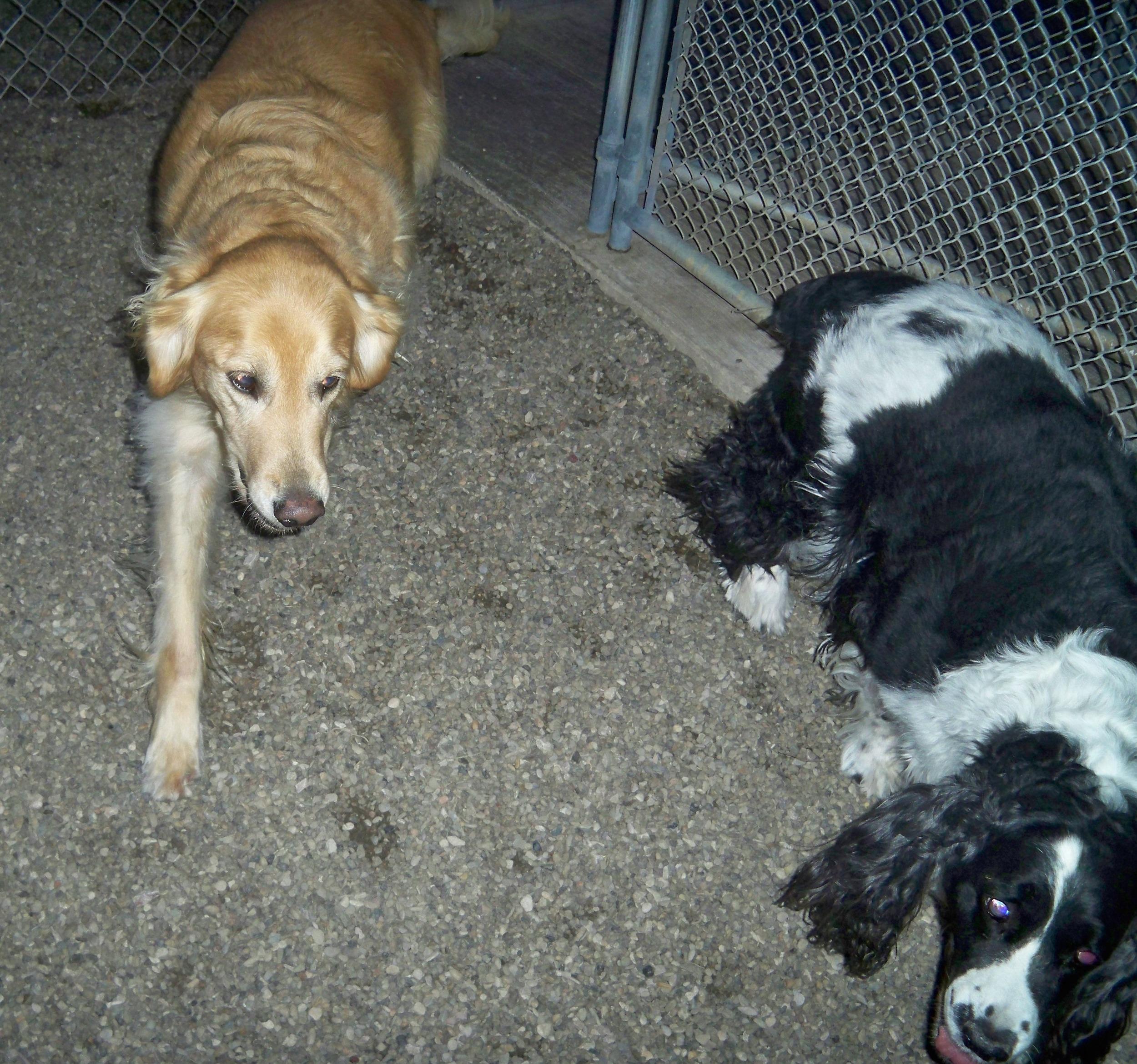 Sophie & Molly.JPG