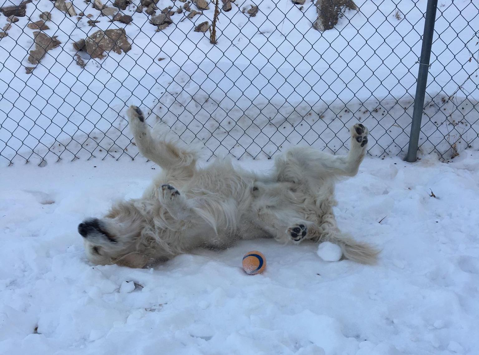 Olaf in snow.jpg