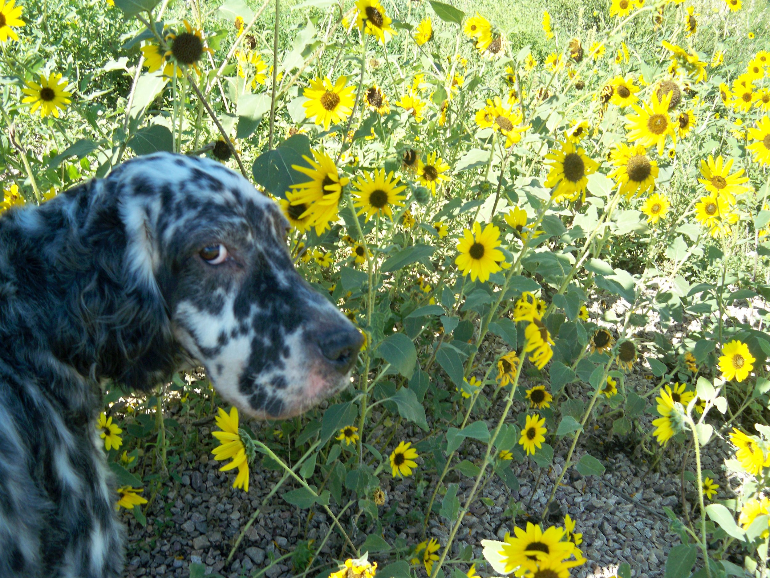 didn't really see me smelling the flowers...JPG