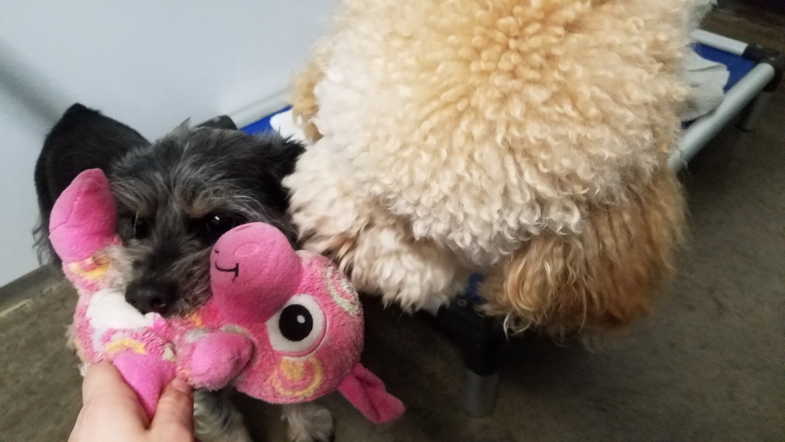 Lola and Leo.jpg
