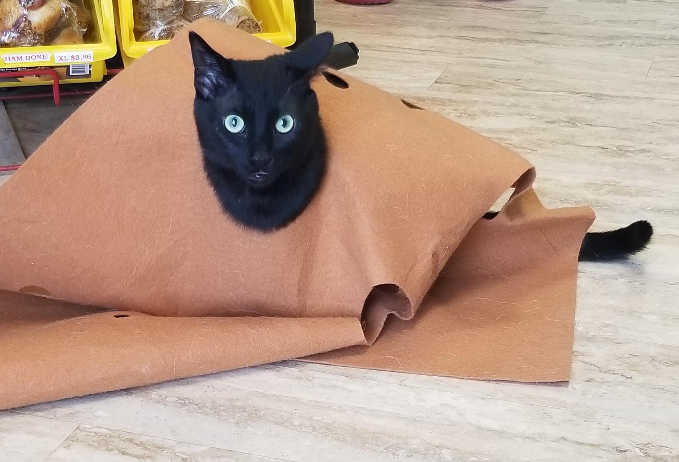 Zazu hiding in blanket.jpg