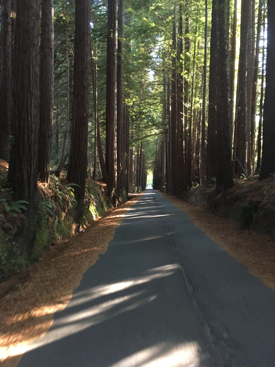 Redwoods - 1 of 26.jpg