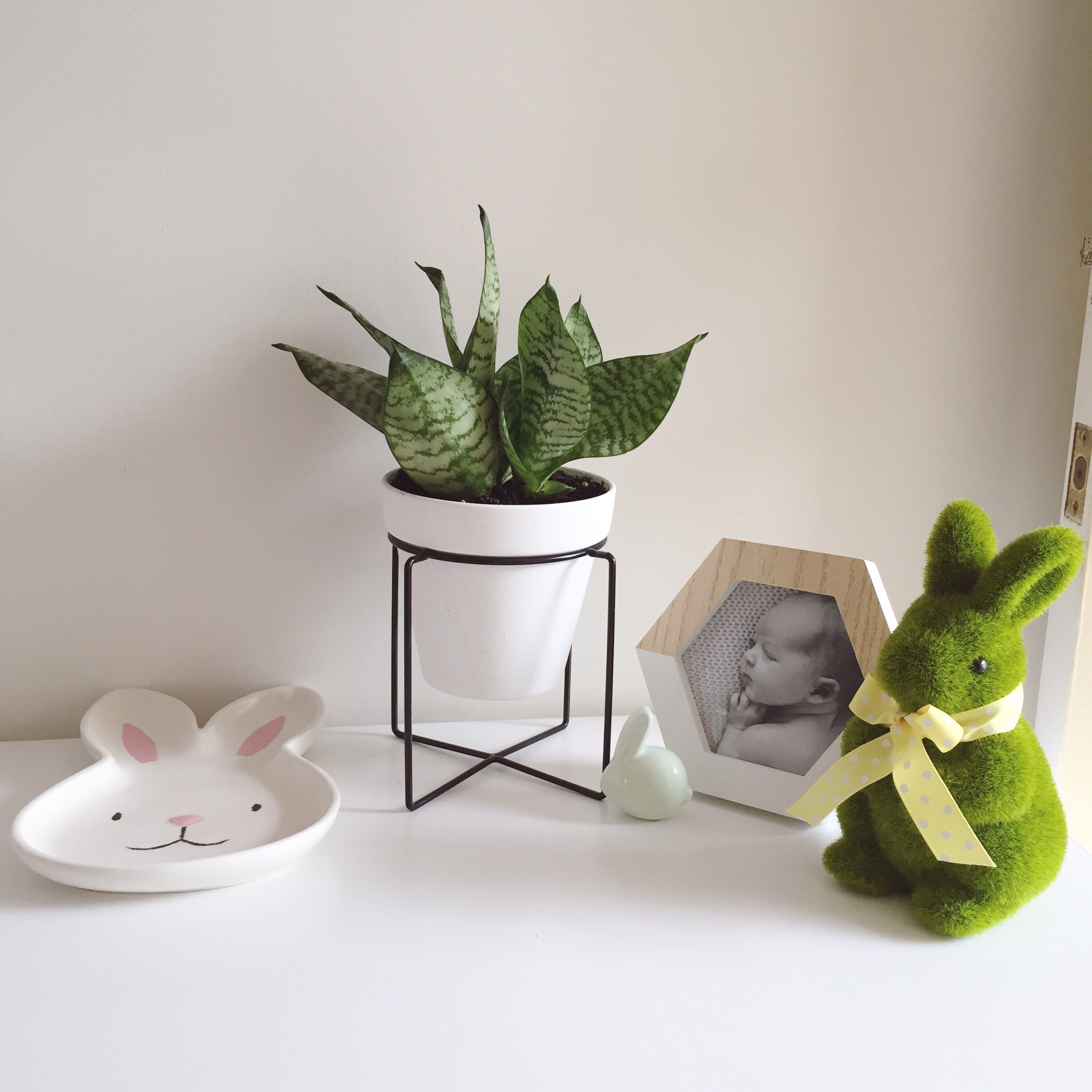 Moss bunny from Woolworths (last year I think), bunny plate from Target this year