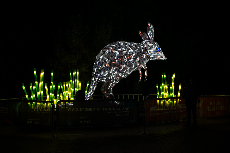 Giant Bilby light at Taronga Zoo during Vivid