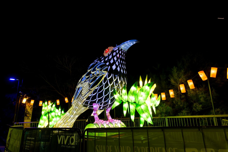 Vivid at Taronga Zoo