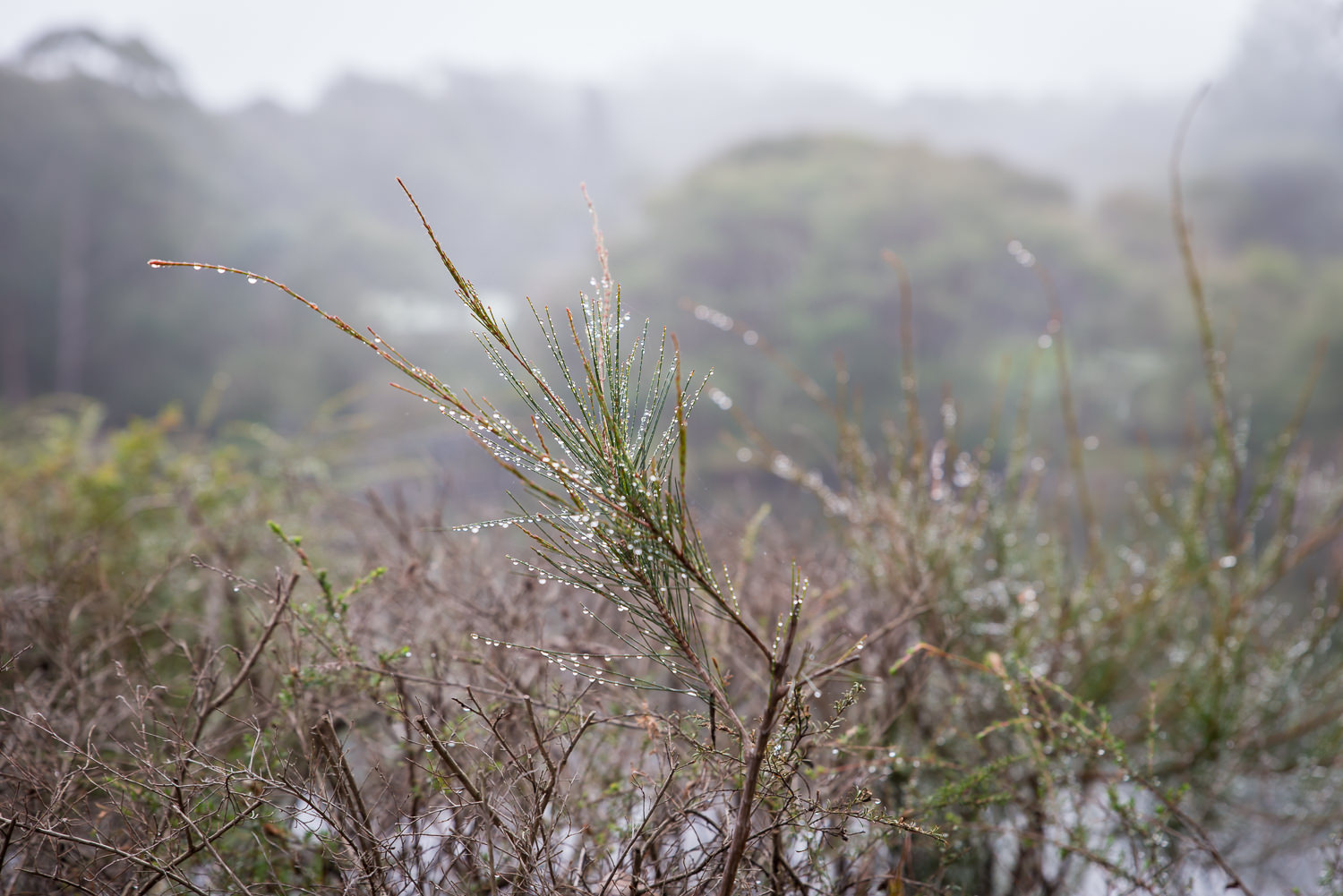 I was meant to be taking photos of the alligators in the lake but got distracted by the water droplets on the plants! You can see the misty morning in the background