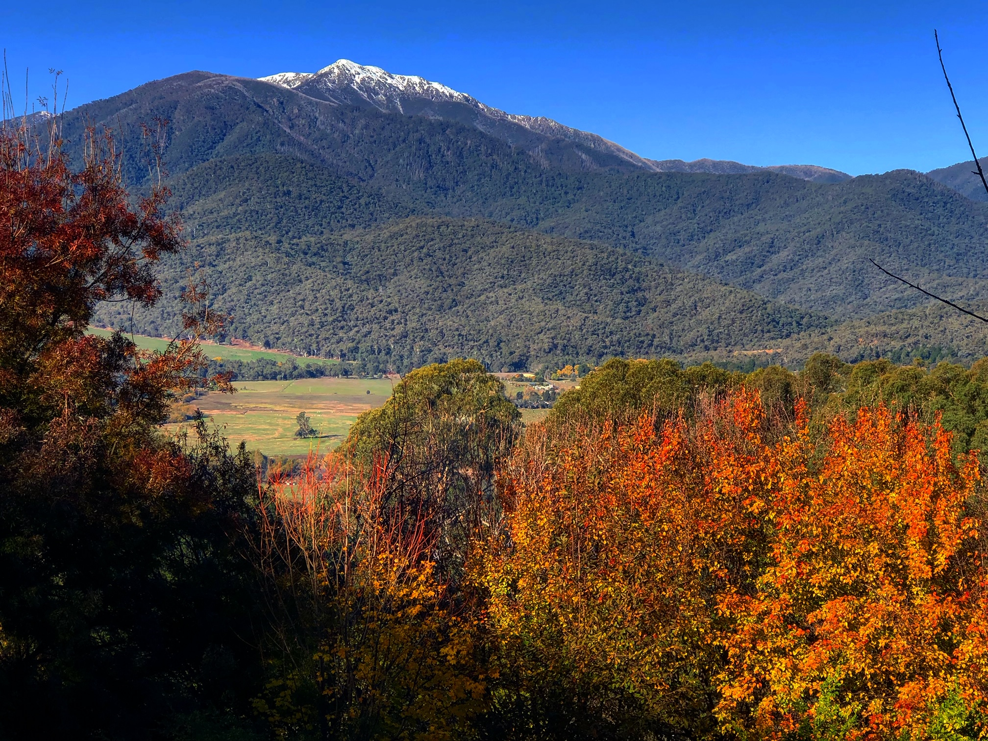 Looking to Mt Bogong, Victoria's highest mountain from the Estate. Above Mt Beauty, nearby Bright.