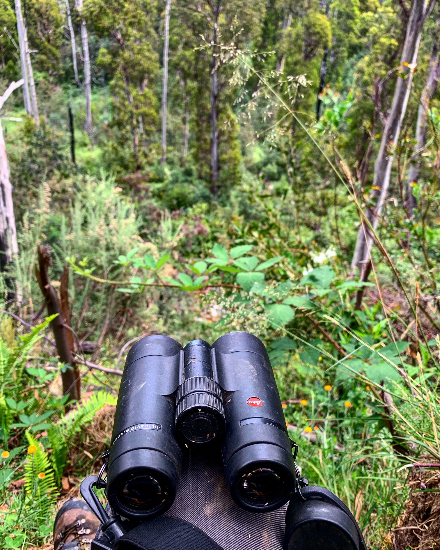 Sitting on the edge of a cliff top glassing into forest across from a small mountain stream… Hunting the Victorian high country of Australia.