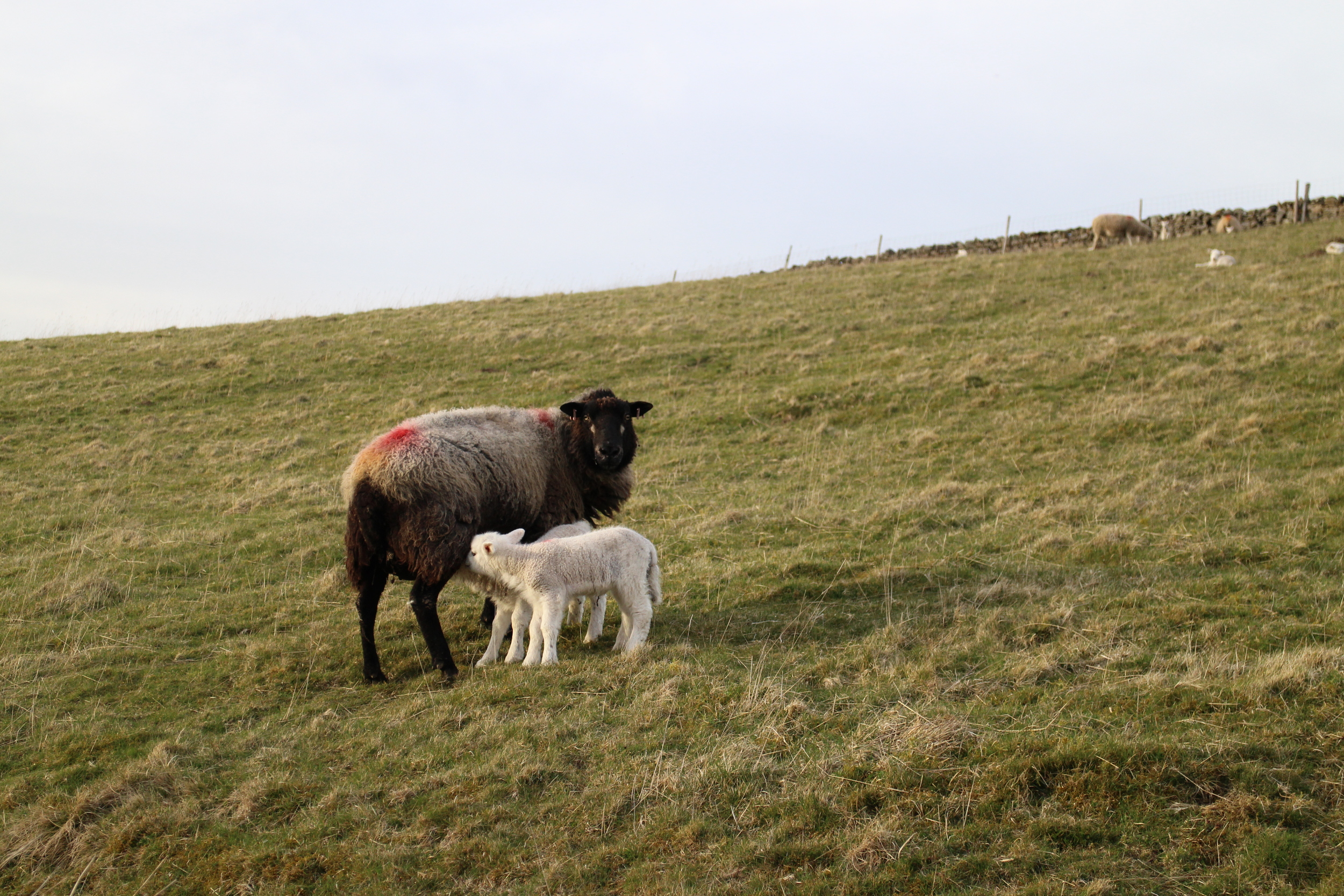 Pennine Way residents