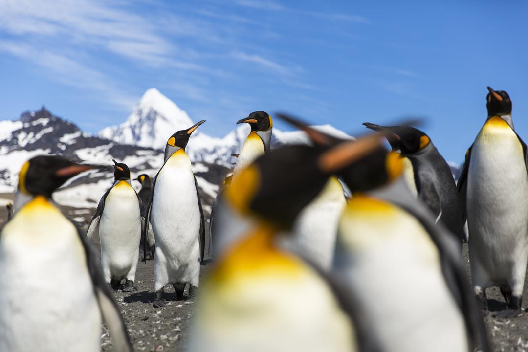 Fra 29. november til 18. desember i 2015 fikk jeg være med som trainee på Fram. Turen gikk Fra Ushuaia i Argentina til Falklandsøyene, Sør Georgia og Antarktis.
