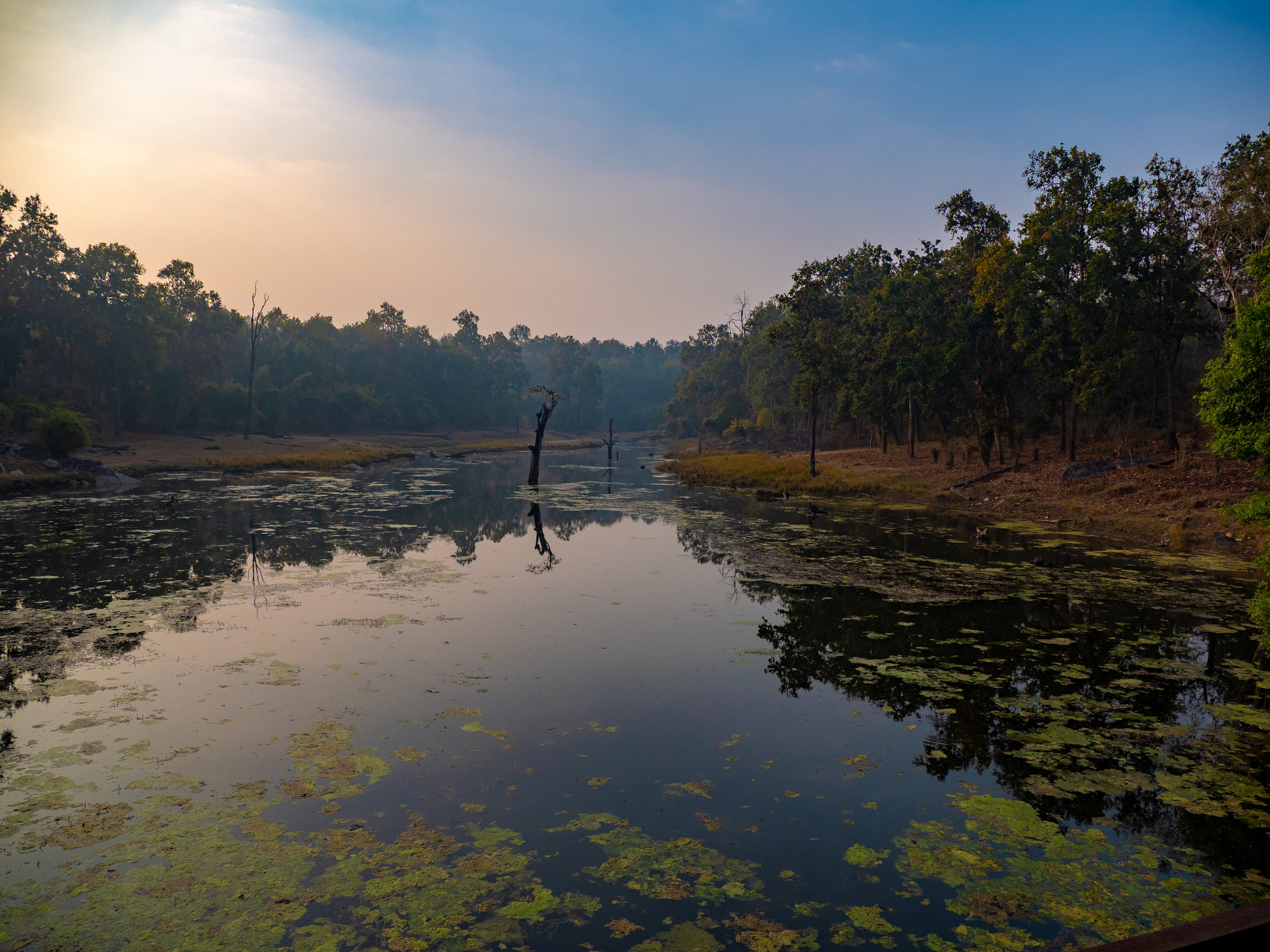 Kanha pond sunrise.jpg