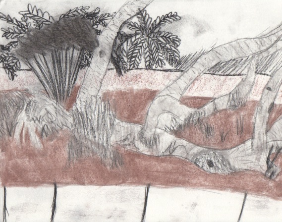 Ringling Gardens 2014. Charcoal, conte crayon, graphite, and sketching paper.