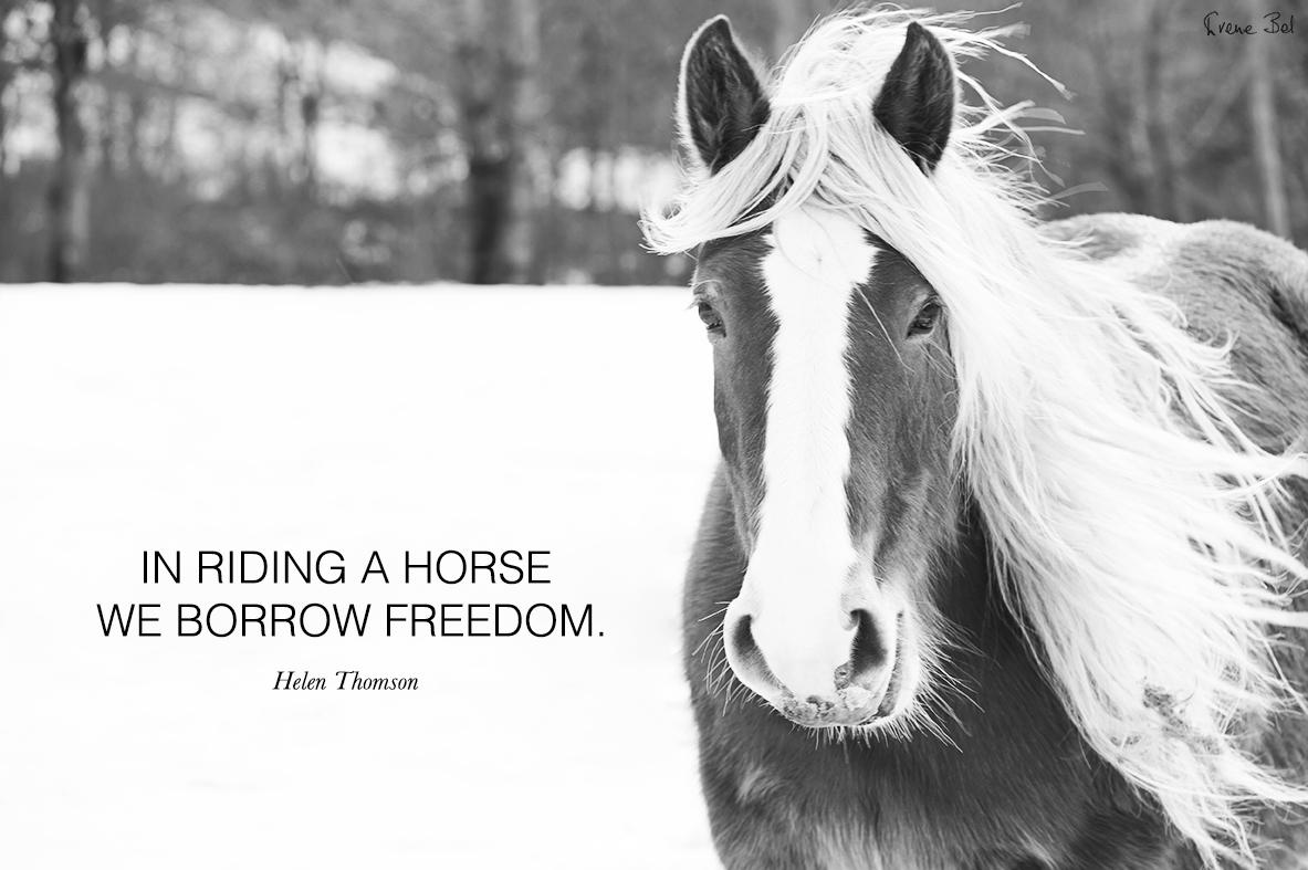 irene_bel_horse_quote.jpg