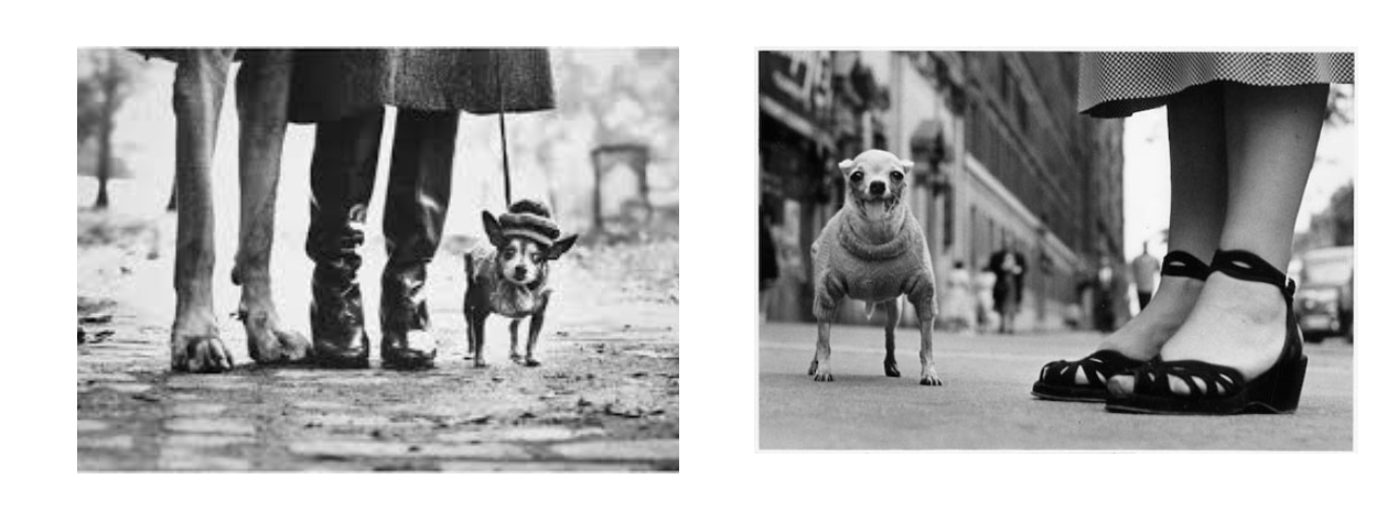 erwitt-photographer-dog