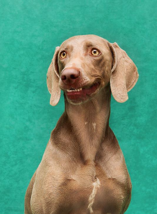 fotografiar perro barcelona