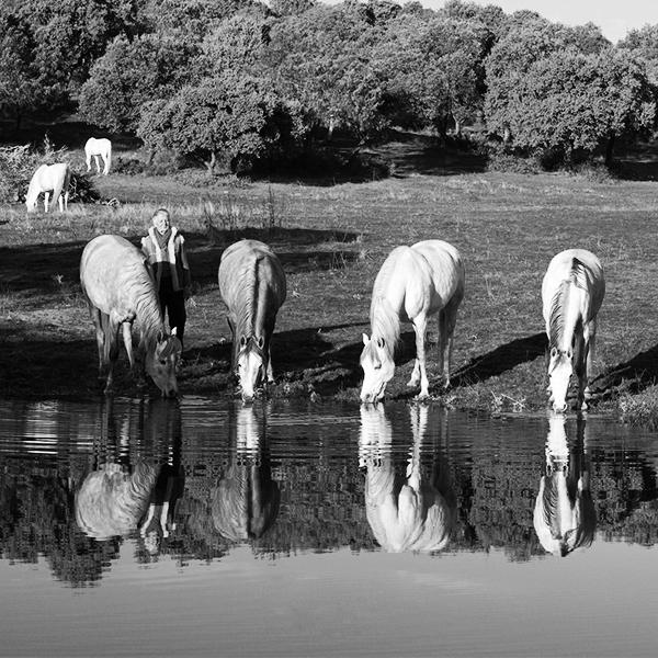 caballos yeguada