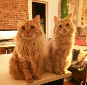 Kitty and Leo!