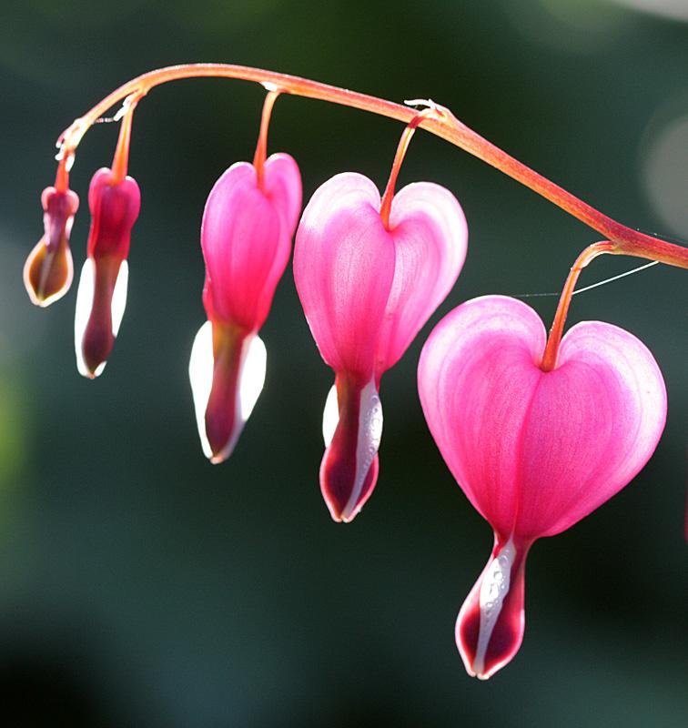 hearts-small.jpg