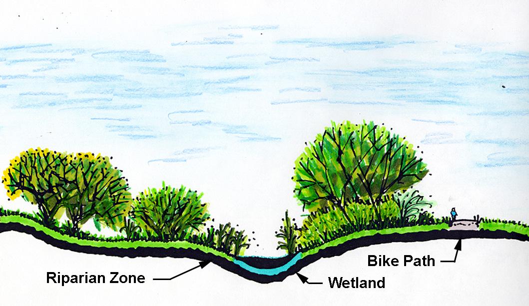 Wetland1.jpg