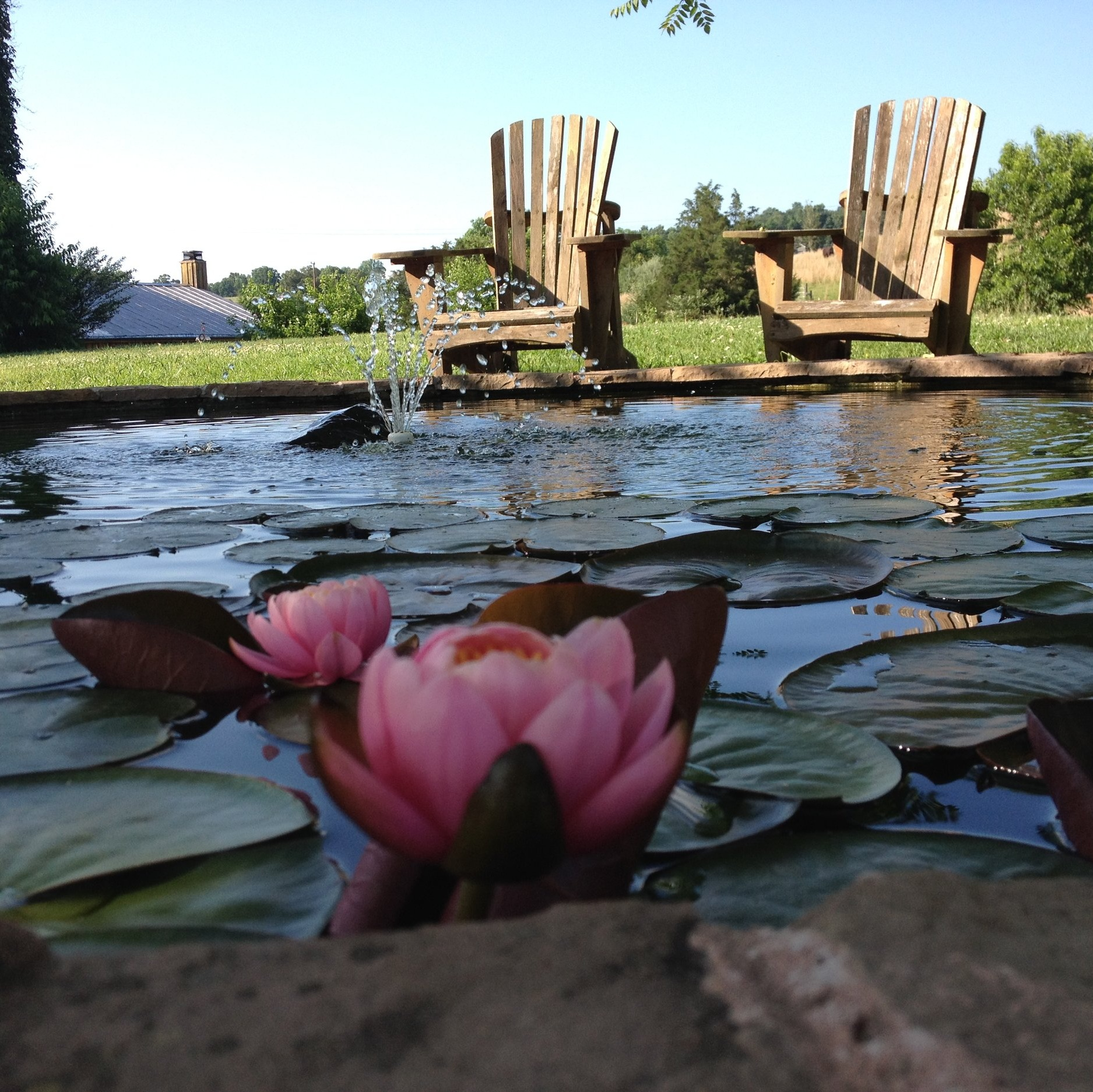 unearthing-writing-retreat-lily-pond.JPG