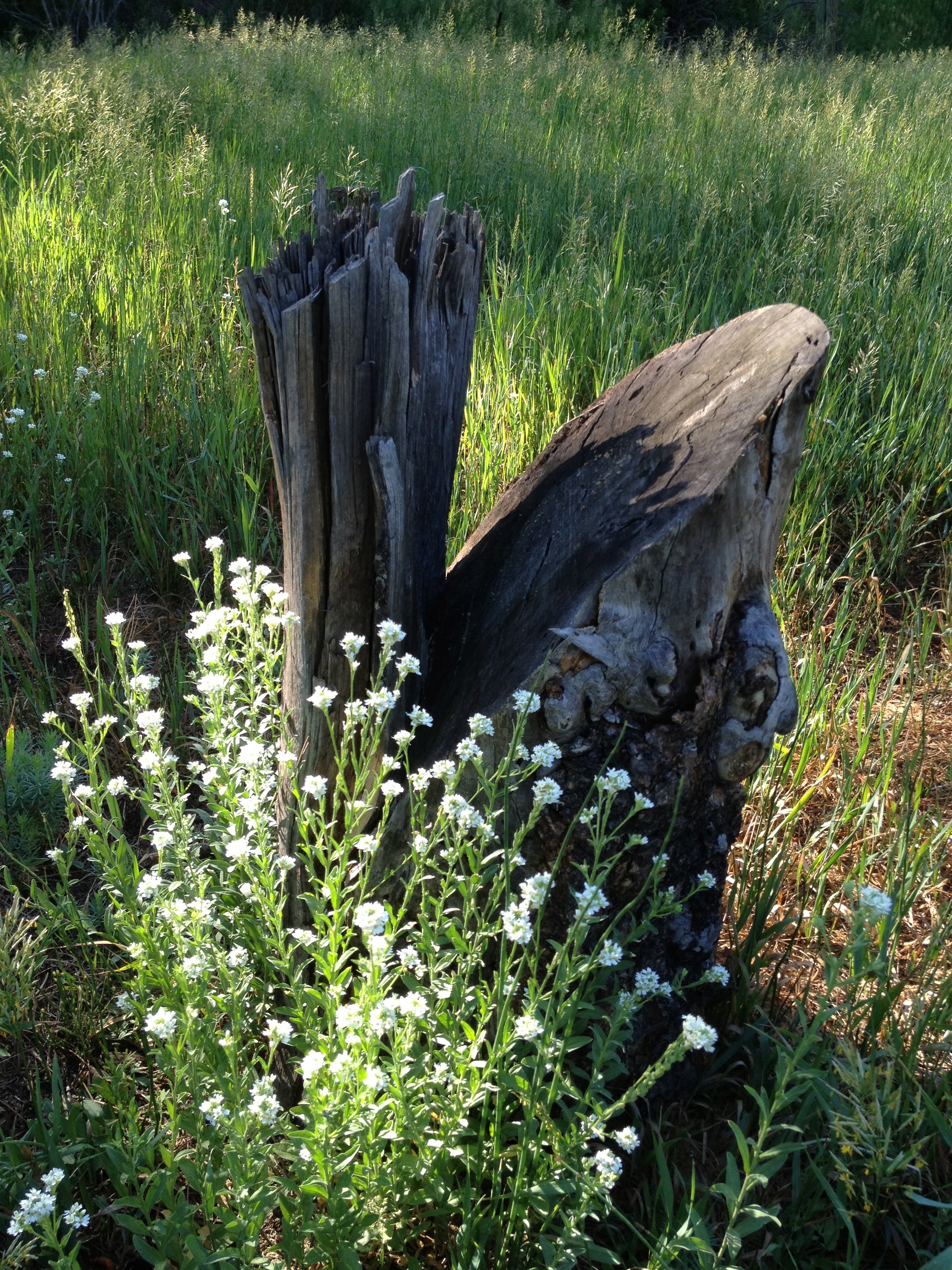 jani tree stump flowers.jpg