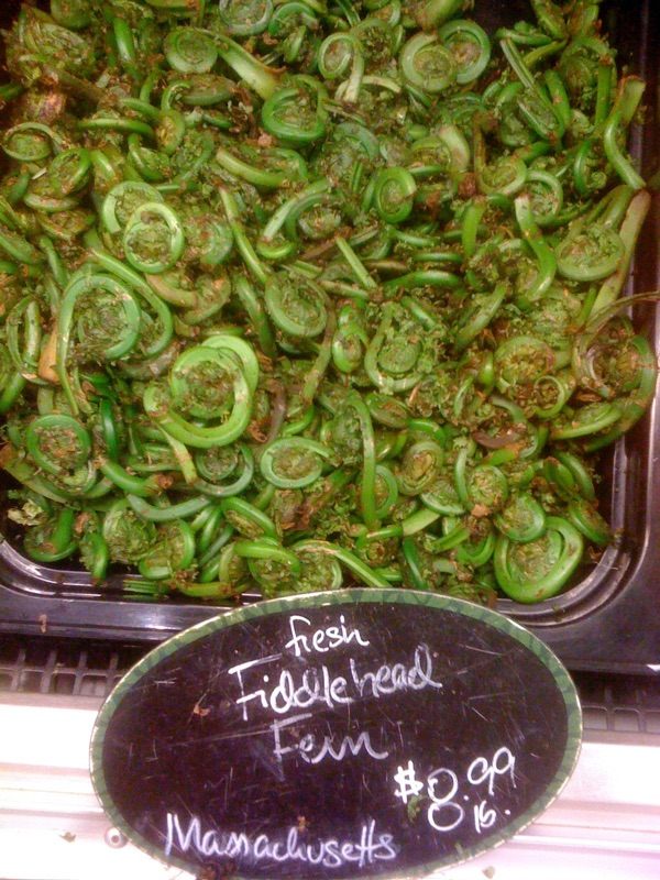 Fiddlehead Ferns by Joseph D'Agnese