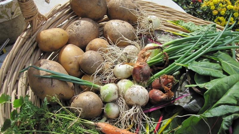 garden vegetables photo by Joseph D'Agnese