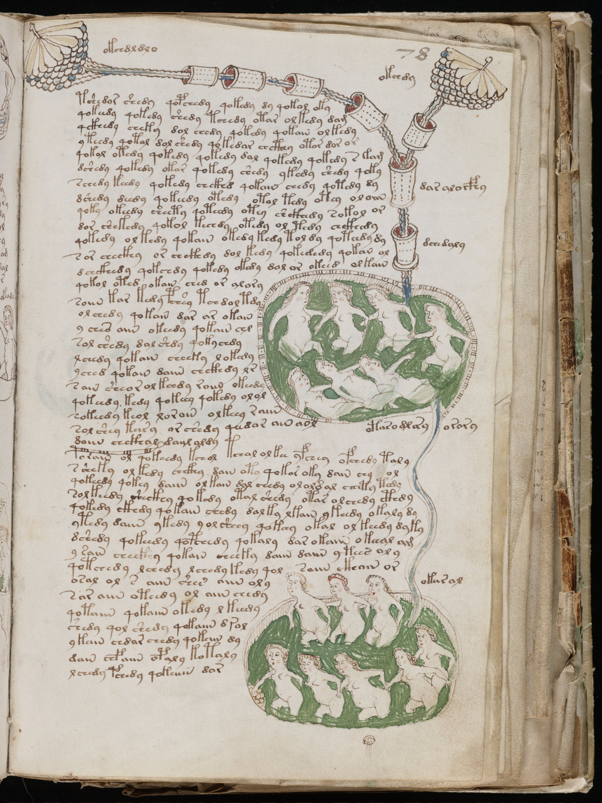 One of many bizarre pages from the Voynich manuscript.