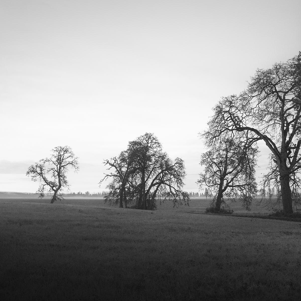 Trees of Mystery 3.jpg