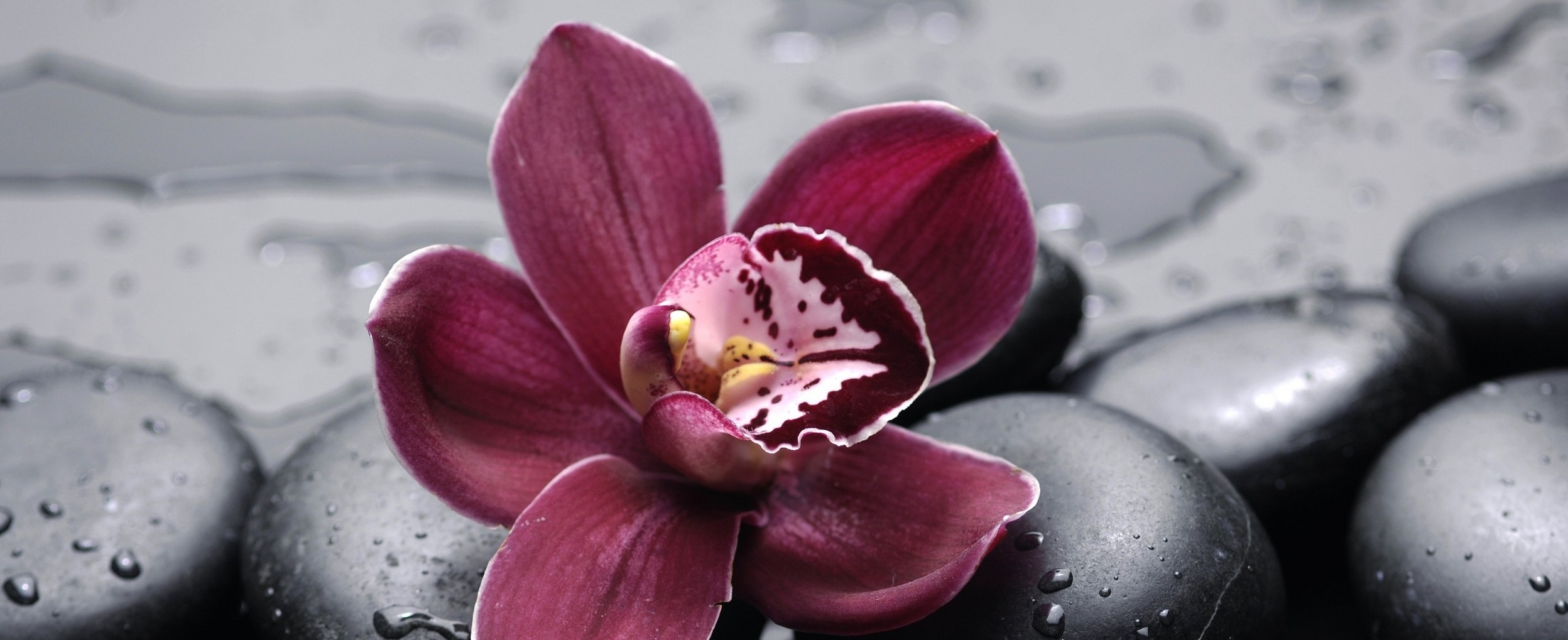 6851717-orchid-wallpaper.jpg