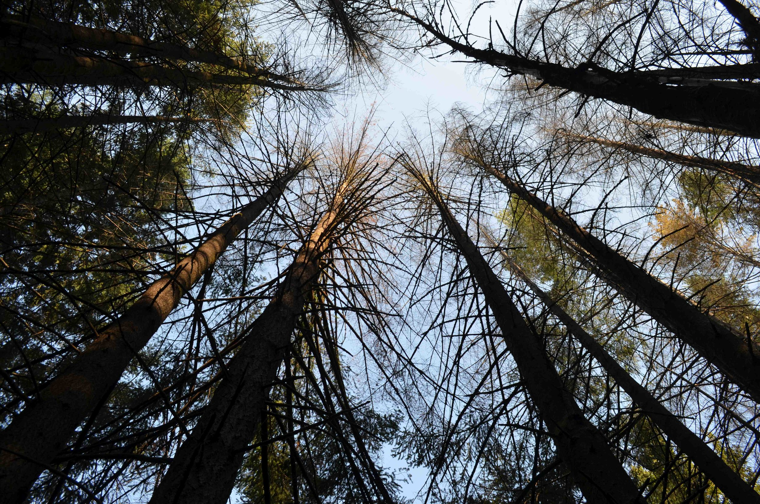 Are your trees STRESSED out?